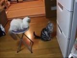 Кот И Волшебный Холодильник